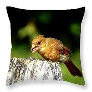 Baby Cardinal Throw Pillow