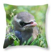 Baby Cedar Waxwing Throw Pillow