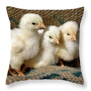 Baby Chicks Throw Pillow by Sandy Keeton