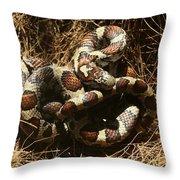 Baby Corn Snake Throw Pillow