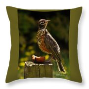 Infant American Robin Throw Pillow