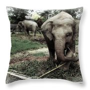 baby Elephant Color Throw Pillow