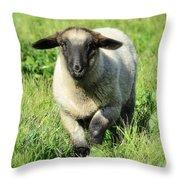 Baby Ewe Throw Pillow