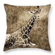 Baby Giraffe In Grasses Throw Pillow