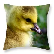 Baby Gosling Throw Pillow