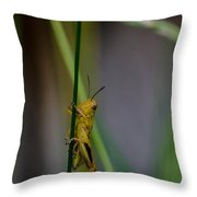 Baby Grasshopper Throw Pillow