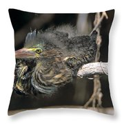 Baby Green Heron Resting On A Branch Throw Pillow