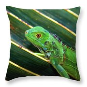 Baby Green Iguana Throw Pillow