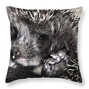 Baby Hedgehog Throw Pillow