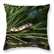 Baby King Snake Throw Pillow