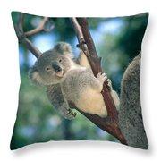 Baby Koala Bear Throw Pillow
