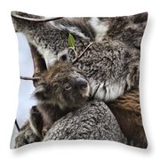 Baby Koala V2 Throw Pillow