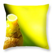Baby Lemon On Tree Throw Pillow by Ben and Raisa Gertsberg