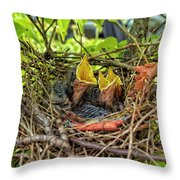 Baby Mockingbirds Throw Pillow