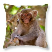 Baby Monkey Throw Pillow