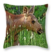 Baby Moose Throw Pillow