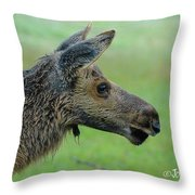Baby Moose With Dew Throw Pillow