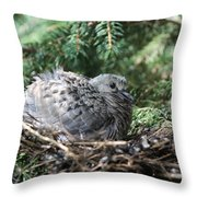 Baby Morning Dove Throw Pillow
