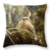 Baby Owl Sleeping Throw Pillow