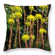 Baby Palm Trees Throw Pillow