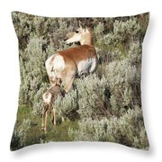 Baby Pronghorn Feeding Throw Pillow