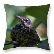 Baby Robin Throw Pillow