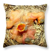 Baby Robins Newly Hatched Throw Pillow