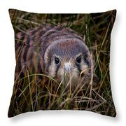 Baby Sage Grouse 2 Throw Pillow