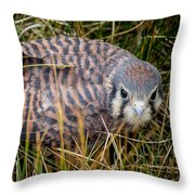 Baby Sage Grouse Throw Pillow