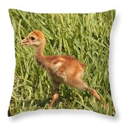 Baby Sandhill Crane Throw Pillow