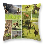 Baby Sandhills Collage Throw Pillow