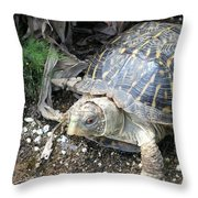 Baby Tortoise Throw Pillow