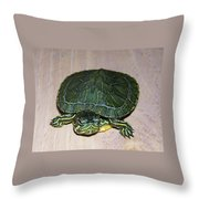 Baby Turtle Looking Up Throw Pillow
