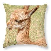 Baby Vicuna Throw Pillow