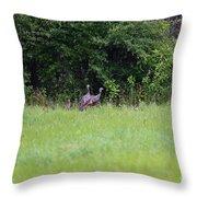 Baby Wild Turkeys Throw Pillow
