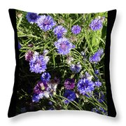 Bachelor Buttons-1 Throw Pillow