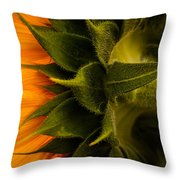 Back Angle Of Sunflower Throw Pillow