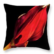 Back Lit Black Calla Lily Throw Pillow