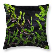 Back-lit Conifer Branches Throw Pillow