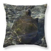 Back Of Turtle Throw Pillow