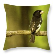 Backed Up Rose Breasted Grossbeak Throw Pillow