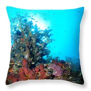 Backlit Coral Throw Pillow