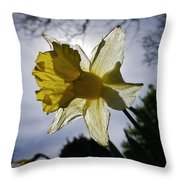 Backlit Daffodil Throw Pillow