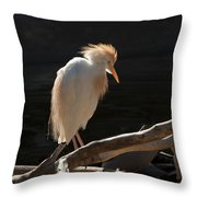 Backlit Egret Throw Pillow
