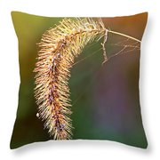 Backlit Seed Head In Fall Throw Pillow