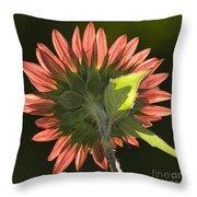 Backlit Sunflower  Throw Pillow