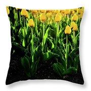Backlit Tulips Throw Pillow