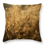 Backlit Wildflower Seeds In Autumn Throw Pillow