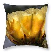 Backlit Yellow Cactus Flower Throw Pillow