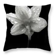 Backside Daffodil Dew Throw Pillow